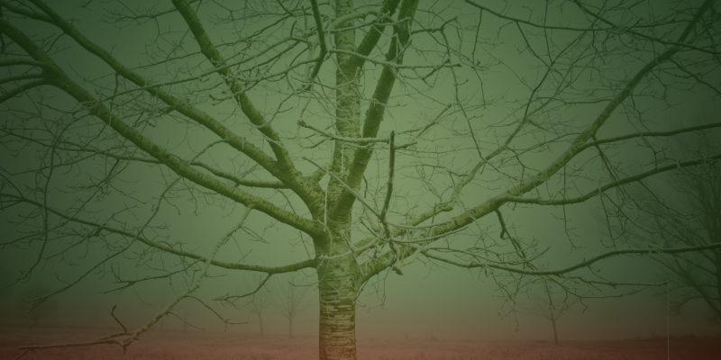 Sodom´s  Winter